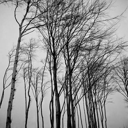 Black and White, Trees, Sky
